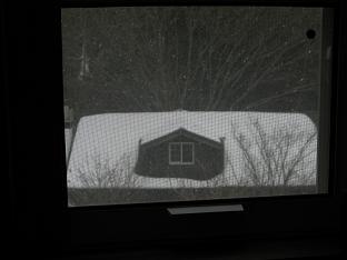 深々と雪が
